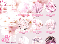 SAKURA SELECTION